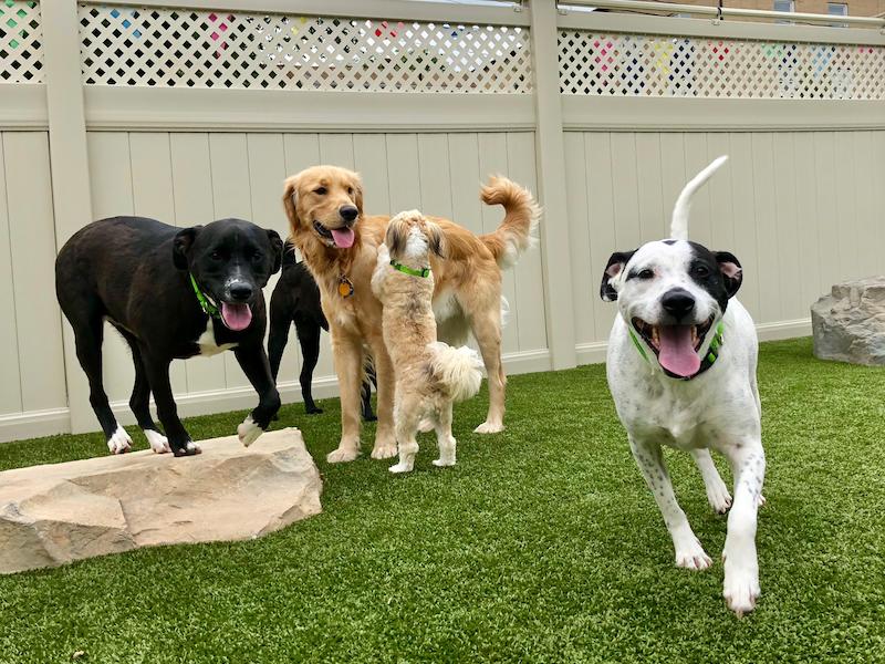Lounging At Dog Rock Resorts